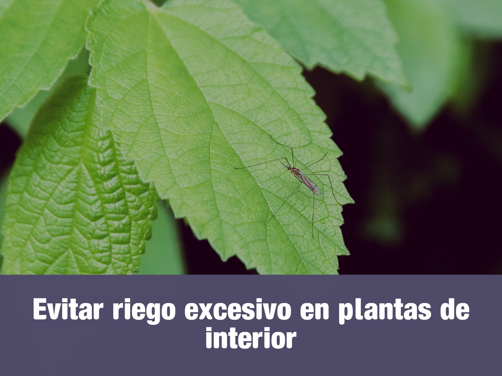 evitar-riego-excesivo-en-plantas-de-interior