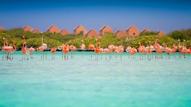 Flamants rose sur une plage de Bonaire