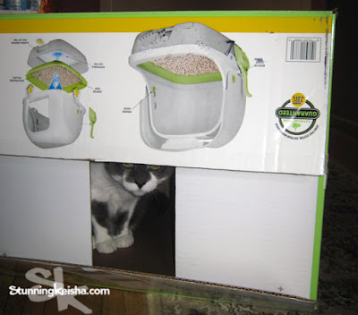 From a Cat's Perspective: Tidy Cat Breeze #chewyinfluencer