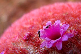 Hoa xuong rong 3