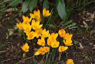 Gelbe kleine Blumen