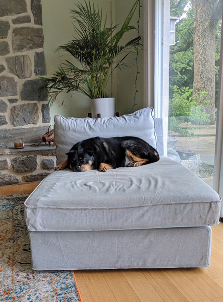 image of Zelda the Black and Tan Mutt lying contentedly on a chaise near a large window