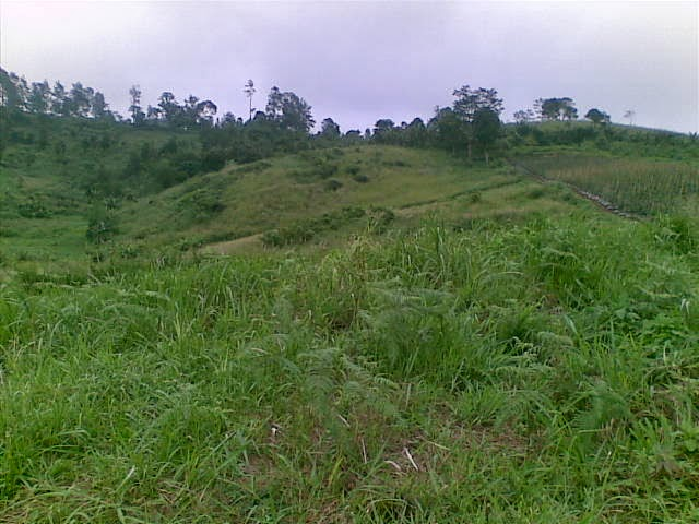 Foto(5195) Jual Tanah Milik | Kebun 23 Ha, Lokasi Puncak jual tanah di puncak
