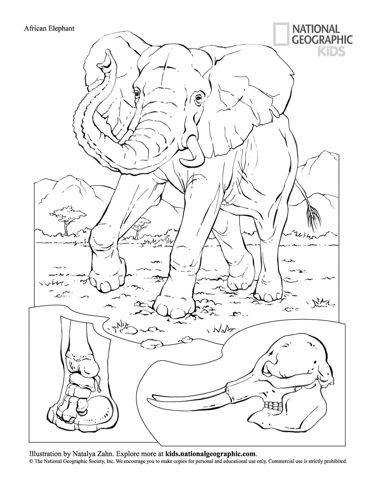 livro de colorir animais grÁtis para baixar em pdf espaÇo educar