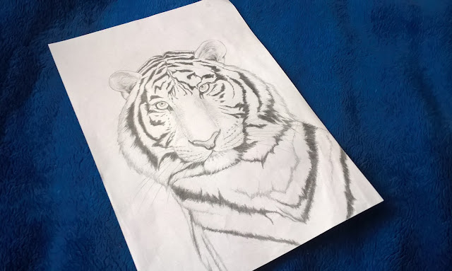 rysunek biały tygrys