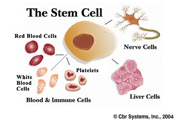 Adult Stem Cell Cure 91