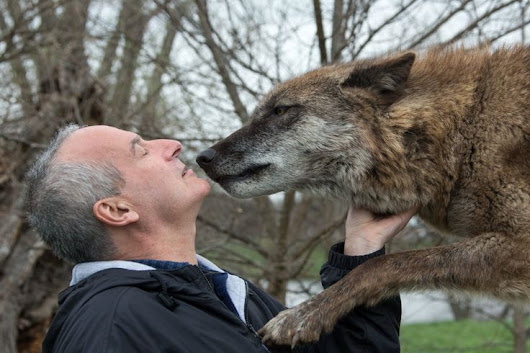 New Study Shows Dog (And Wolf) Kisses May Be Good for You