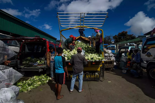Cleaning of Cabbages La Trinidad Vegetable Trading Post Benguet Cordillera Administrative Region Philippines