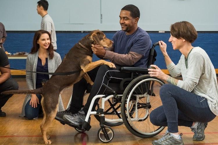 A DOG'S WAY HOME เพื่อนรักผจญภัยสี่ร้อยไมล์ - โพสต์อัพนิวส์