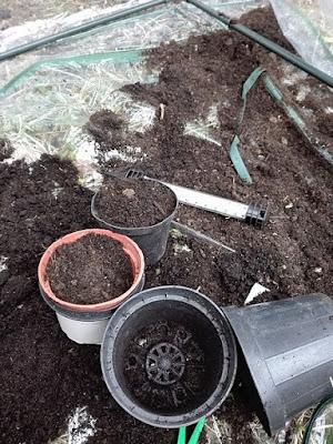 Bufera di vento nell'orto: semenzaio a faccia in giù.