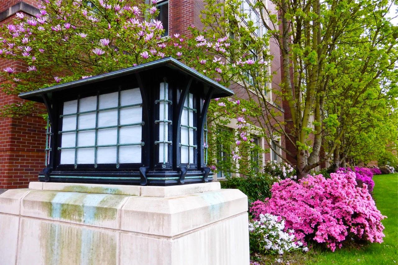 spring, magnolia, azalea, spring blossoms, spring 2015, spring magnolia blossoms, spring azalea blossoms, campus walk, spring campus walk
