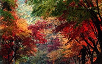 El otoño se apodera de los bosques coreanos
