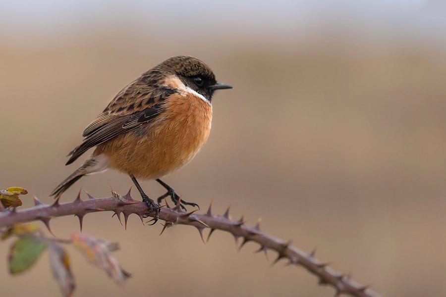 Week end national de comptage des oiseaux des jardins for Week end des jardins