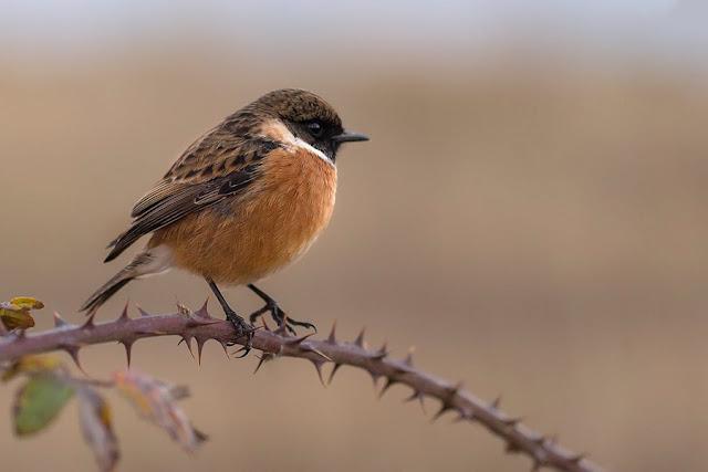 protéger les oiseaux des jardins LPO