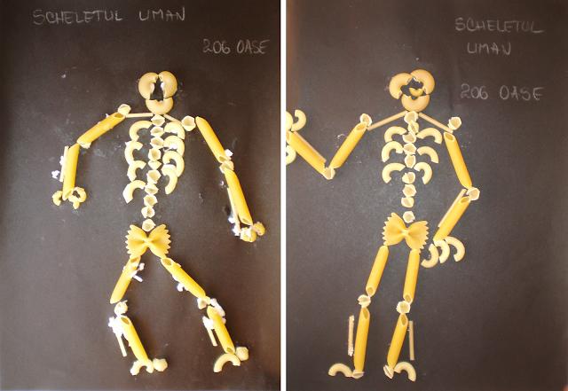 Sistemul osos uman
