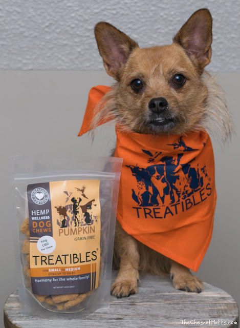 Jada with a bag of Treatibles hemp wellness dog chews