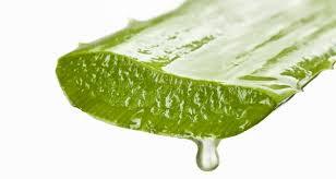 تساعد في تقشير الجسم والتخلص من الخلايا الميتة _تنعيم البشرة  وتجديد خلايا البشرة -تفتيح وتبيض البشرة .