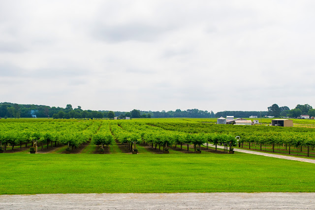 Hinnant Family Vineyards in Johnston County.