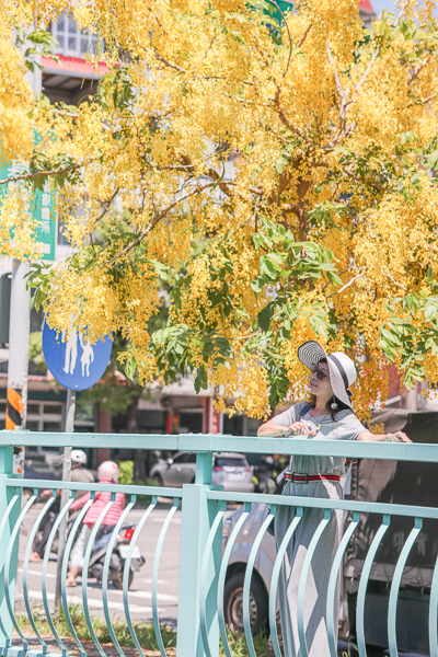 南投福崗路黃金阿勃勒搭配粉綠色欄杆,拍充滿延伸感的美照