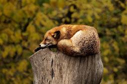 Apakah Hewan , Manusia Bisa Hidup Tanpa Tidur?