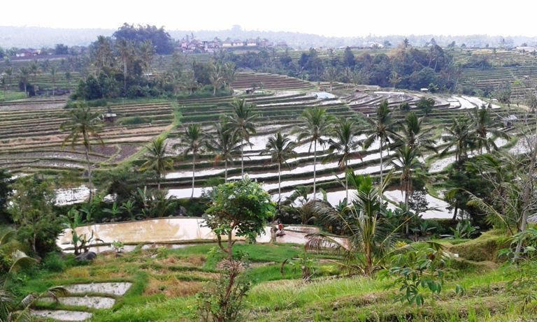 Jatiluwih Bali Countryside Tour Packages - Bali, Countryside, Rice fields Terraces, Jatiluwih, Village, Tabanan, Northwest, Island, Tour, Attractions