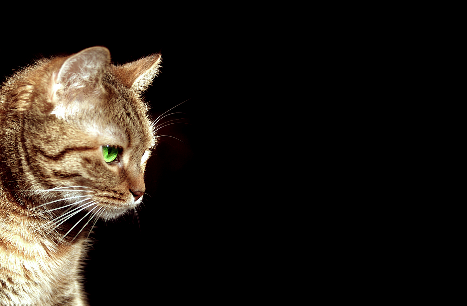 cute cat for 1440x900 - photo #34