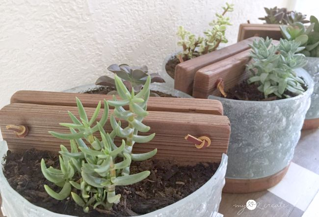 Succulent Planters from Light Fixtures, MyLove2Create