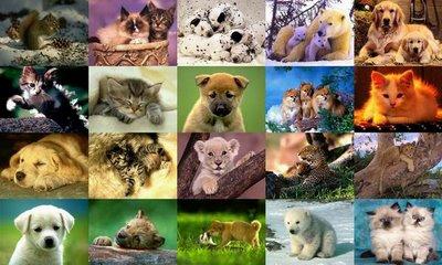 88 Gambar Hewan Beserta Nama Latinnya Terbaru
