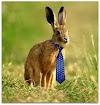 Ο λαγός με τη… γραβάτα!!!