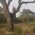 Photo: Man hangs himself after stabbing his wife to death