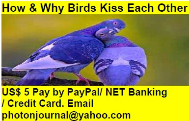 How & Why Birds Kiss Each Other bird story book