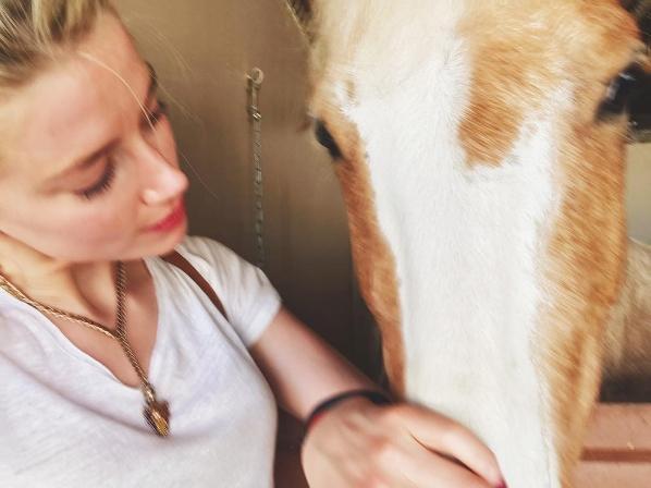 Amber Heard horse arrow