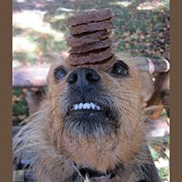 Vera Burger Patties Dog Treat Review