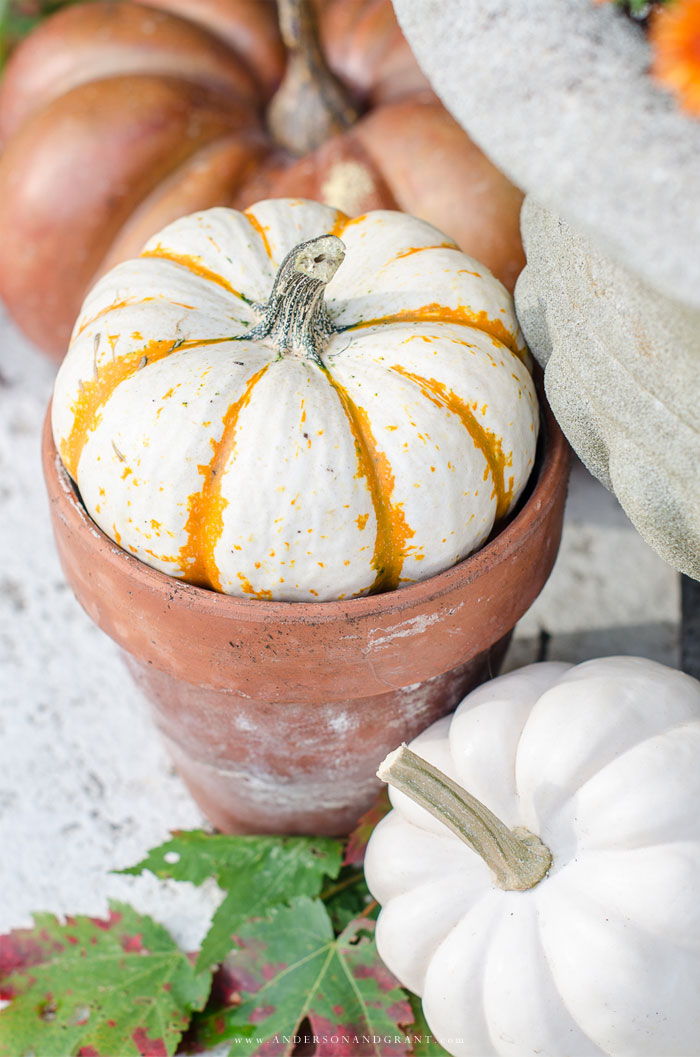 See how to transform your porch for fall using pumpkins, mums, and cornstalks.  |  www.andersonandgrant.com