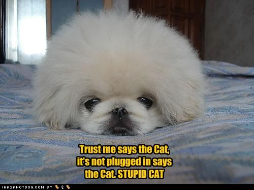 Funny Picture Clip: Funny Dog Pet Quotes