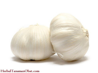 bawang putih, bawang putih tunggal obat kanker, tanaman obat herbal anti kanker, menurunkan tekanan darah, artikel khasiat bawang putih tunggal, manfaat bawang putih untuk kesehatan dan kulit, khasiat bawang putih yang perlu anda ketahui