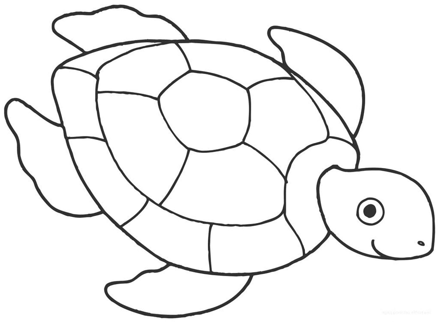 Tranh cho bé tô màu con rùa 3