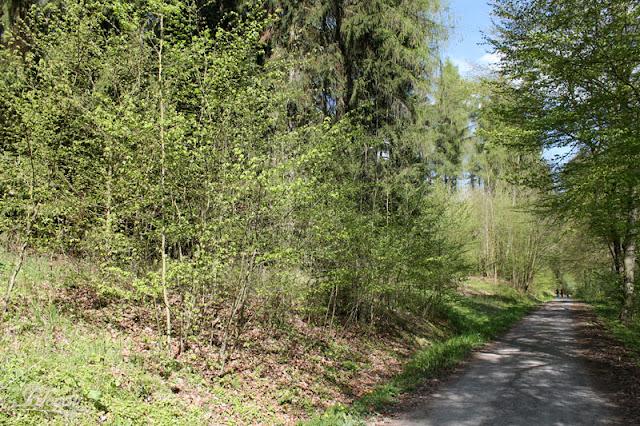 Waldweg zwischen Walldorf und Wasungen