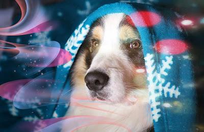imagenes de perritos, perros para colorear, perritos bonitos, fotos de perros, fotos de perros