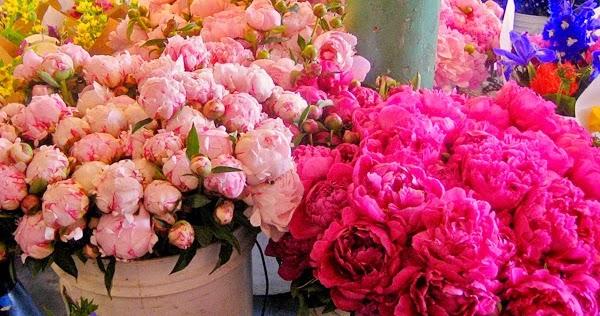 Vw Garden Peony Season At Pike Place Market Seattle