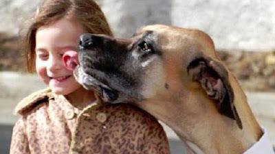Anjing Haram dan Najis - berbagaireviews.com