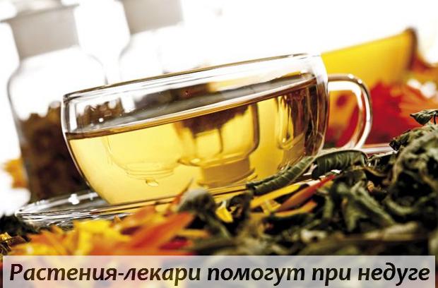 Какие лекарственные растения помогут вам справиться с недугом
