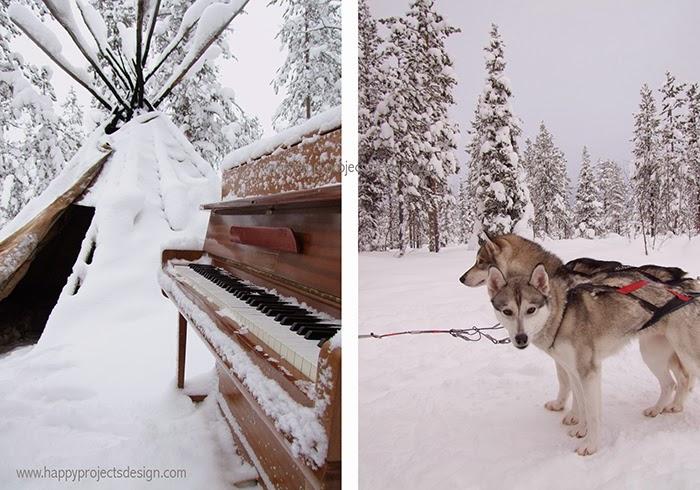 Laponia: trineos de perros