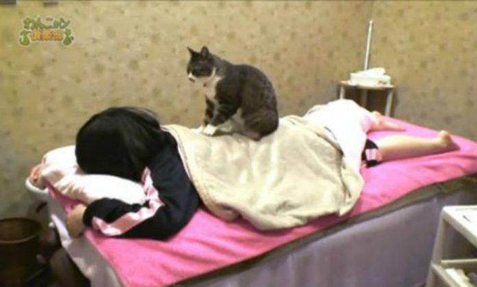 15a80dadbfe2 Απίστευτο  Γάτες κάνουν μασάζ σε ανθρώπους! (ΒΙΝΤΕΟ) - REPORTAZ NET