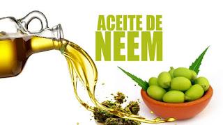 Aceite de Neem para eliminar cucarachas