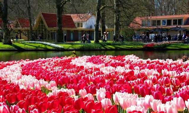Wisata Taman Bunga Keukenhof Musim Semi di Belanda