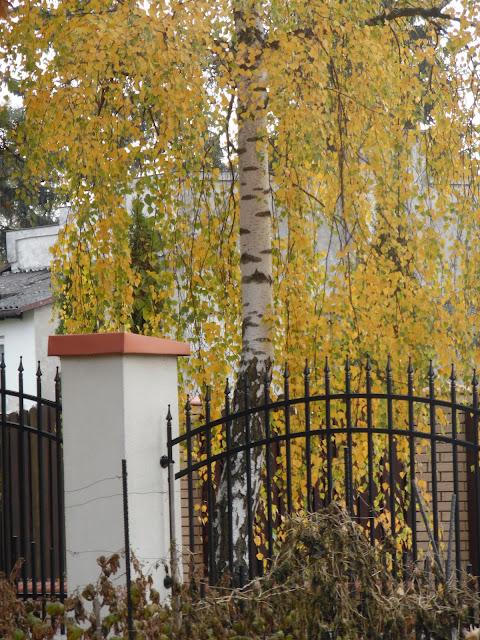 ogrodzenie z prętów