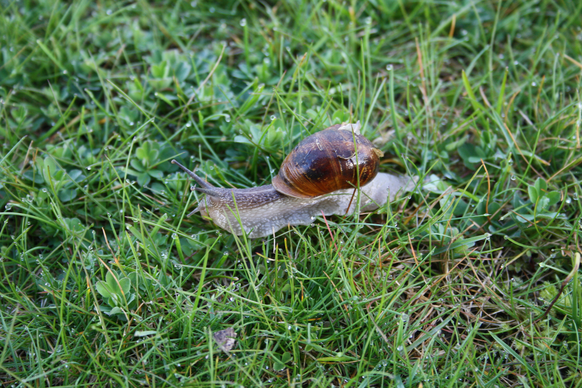 slippery slimy slugs and snails