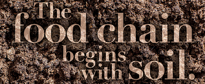 The food chain begins with soil