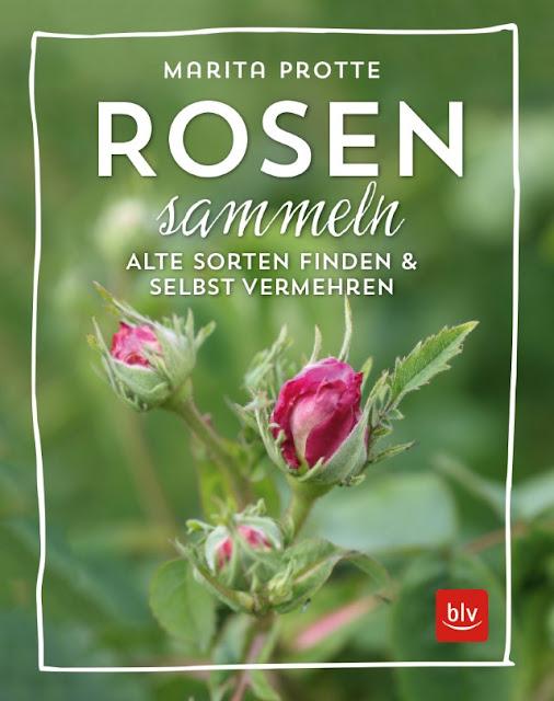 Rosen sammeln - alte Sorten finden und selbst vermehren - BLV-Verlag #rosen #rosenbuch #rosenvermehren #rosensammeln #gartenbuch #buchrezension - Gartenblog Topfgartenwelt